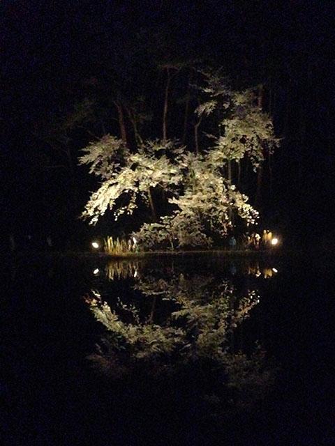 じゅんさい池 観桜会